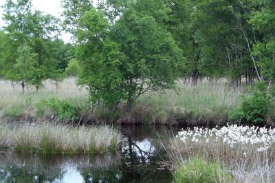 Ewiges Meer Moorlandschaft im Naturschutzgebiet