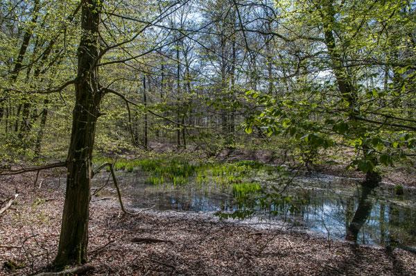 Eichen und Buchenwald im Biener Busch