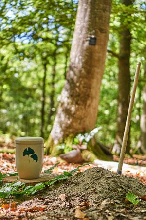 Waldbestattung Urne unter einen Baum